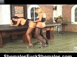 Penelope&Camille leggy shemales in action